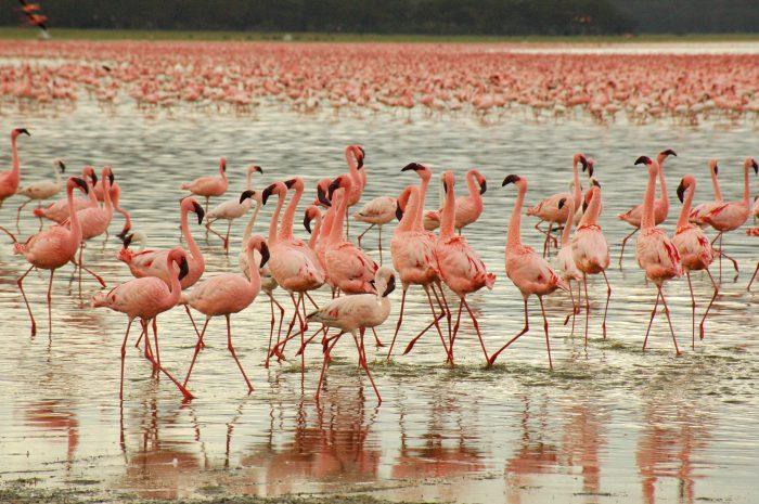 Фламинго могут быть придирчивы к компании